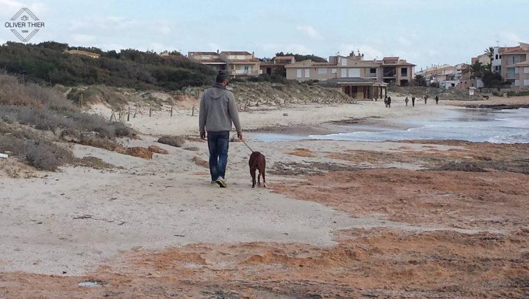 Hunde Strände auf Mallorca