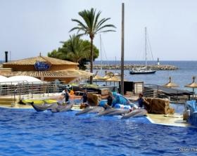 Marineland Mallorca Delphine auf Mallorca