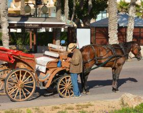 Pferdekutsche Mallorca Palma Arenal Cala ratjada