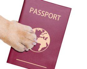 Tiere AirBerlin Deutschland Mallorca Hunde Transport Kosten